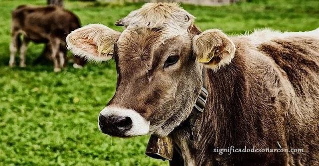 Significado de soñar con vacas