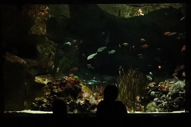 cineaqua-aquarium-paris-avis
