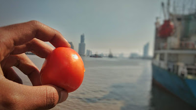 filosofi - tomat on board