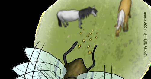 Soon a horse comment retirer les oeufs de mouche de mon cheval for Peinture anti mouche