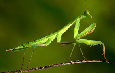 ordo serangga berdasarkan tipe mulut dan sayap