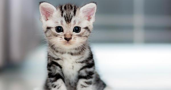 Los gatos y sus curiosidades-PuroIngenio