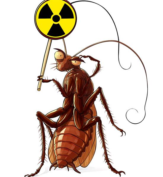 Baratas realmente sobrevivem a bombas Atômicas e radiação nuclear - Img