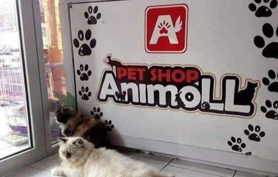 Loker Pati Sebagai Tenaga Kerja di AnimoLL Petshop Pati