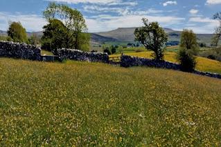 Photo: Cumbria Wildlife Trust