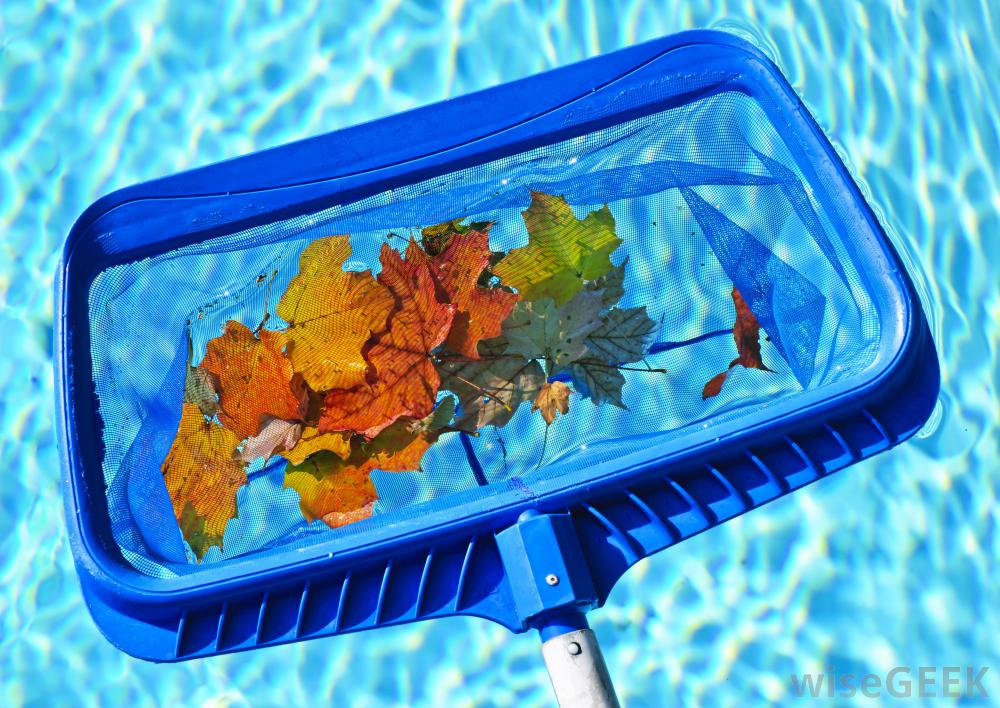 Have Swimming Pool Service Needs 8 Pool Maintenance Tips