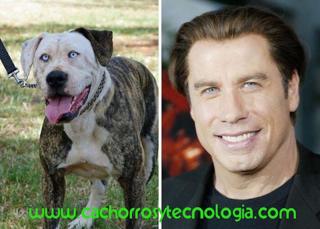 perros se parecen a sus dueños 2020 shurkonrad cachorros tecnologia dog puppy 3