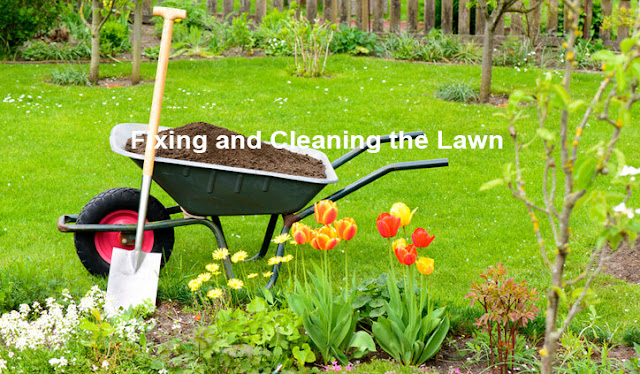 Fixing and Cleaning the Lawn