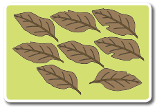 banyak daun berguguran yang dapat Beni kumpulkan kumpulkan www.jokowidodo-marufamin.com