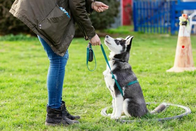 Il padrone addestra il suo cane al parco
