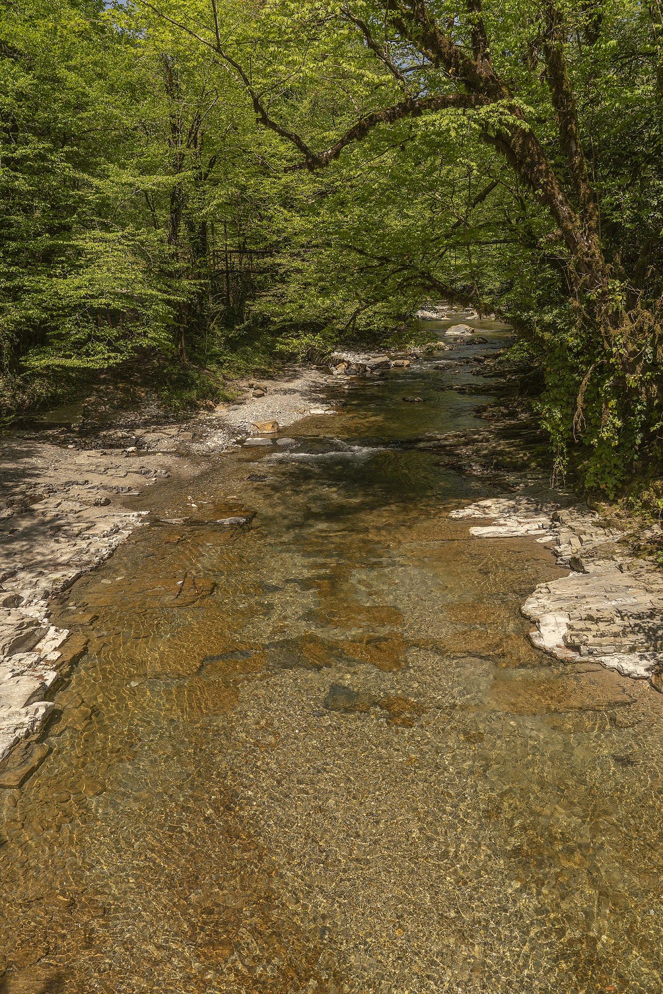 photo Igor Novik mountain river pebbles Sochi Dagomys subtropical forest summer