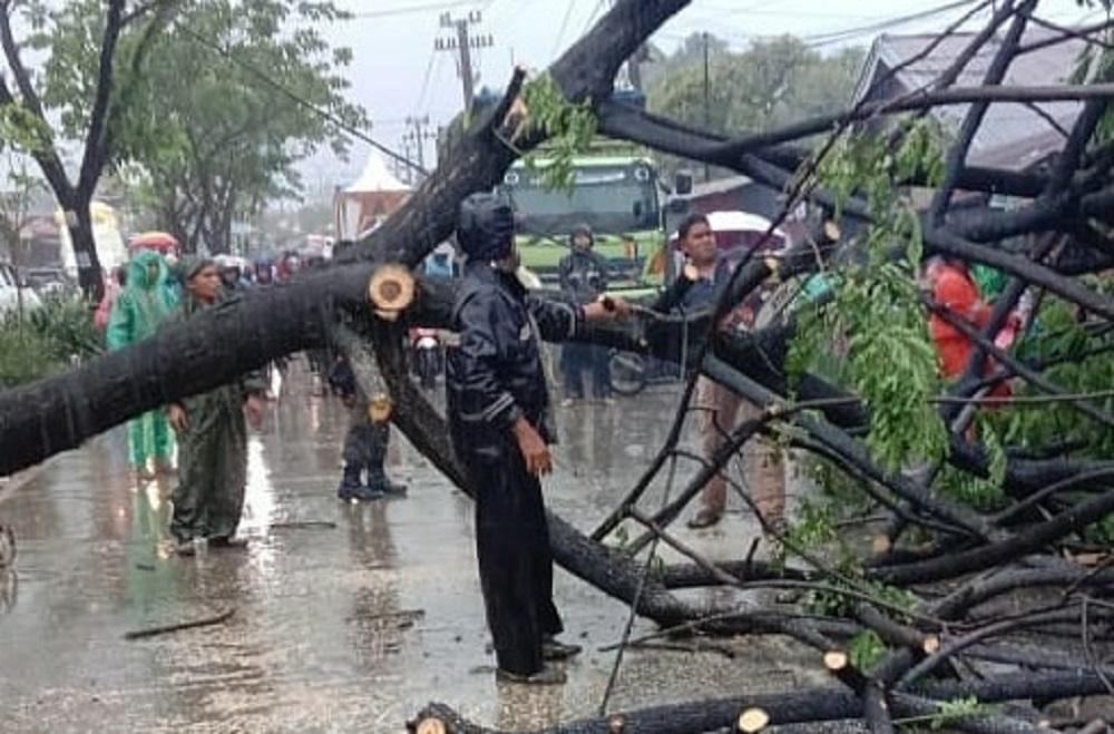 Pohon tumbang di Padang.