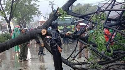Lebih 50 Pohon Tumbang di Padang Akibat Cuaca Ekstrem, Timpa Rumah hingga Rusak Kabel Listrik