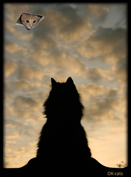 """Photoshopped cat GIF • Funny cat watching ceiling cat in the clouds. """"Hello my friend, I was waiting for you, how are you feeling today?"""""""