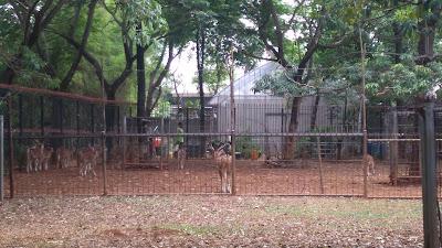 Kebun binatang mini. Ada rusa dan beberapa unggas
