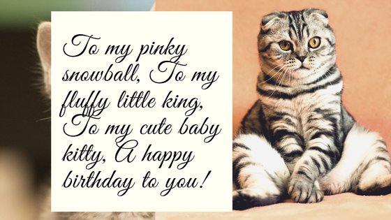 Birthday Wishes for Cats