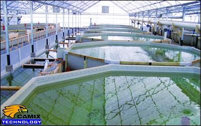 Công ty tư vấn đầu tư trạm xử lý nước thải nhà máy chế biến thủy sản - Phương pháp xử lý sinh học