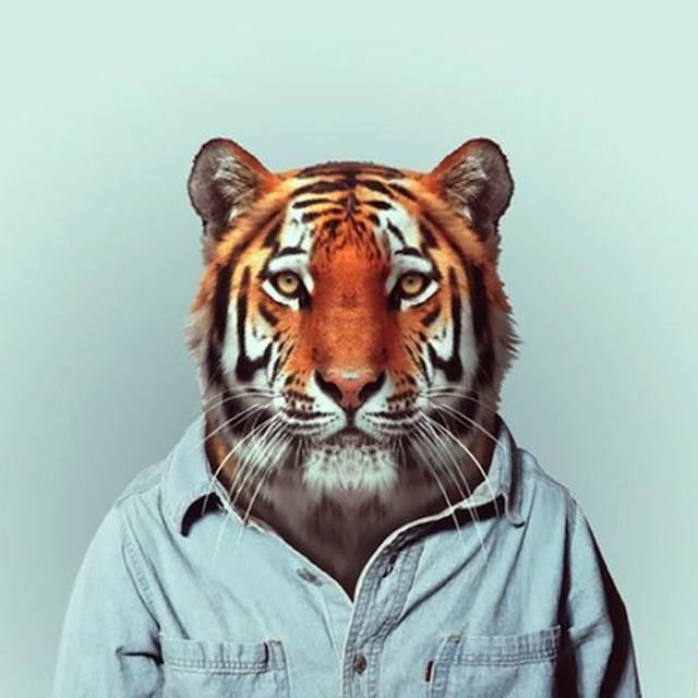 harimau-pakai-kemeja