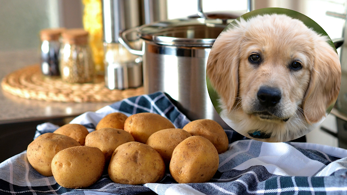 Can dogs eat cooked, raw or mashed potatoes?