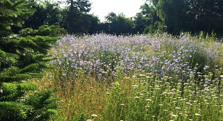 Wildblumen statt Rasen