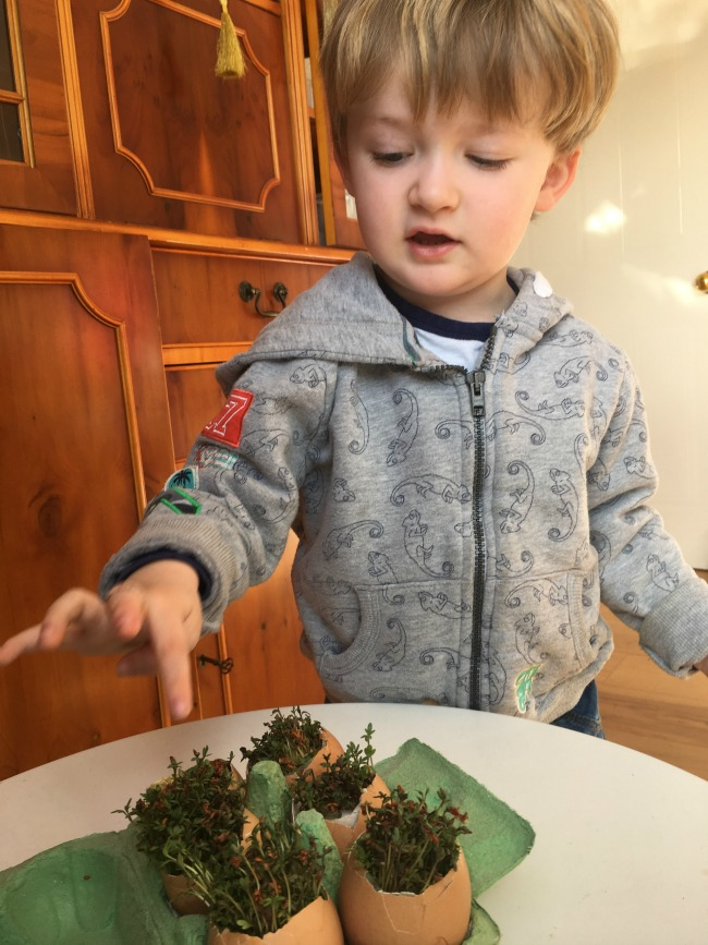 Our-weekly-journal-10-April-toddler-pointing-at-egg-shells-with-cress-hair