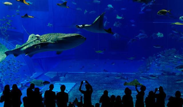 biggest aquarium in us, largest aquarium in the united states, largest aquarium in the us, largest aquarium in us, the largest aquarium in the united states, biggest aquarium in the us, biggest aquarium in the united states, biggest aquarium in united states, what's the biggest aquarium in the united states, largest aquarium in us 2019, where is the biggest aquarium in us