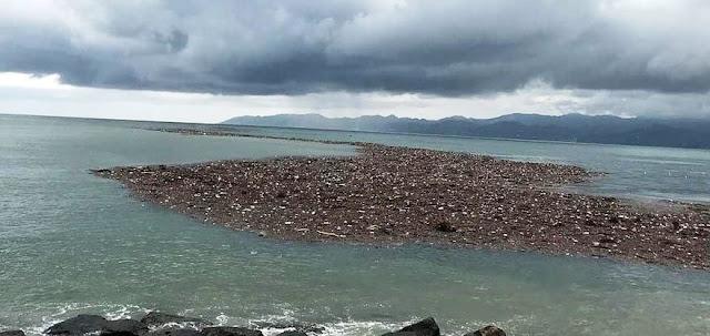 Τα φουντούκια στον Πόντο επιπλέουν στη Μαύρη Θάλασσα (Video)