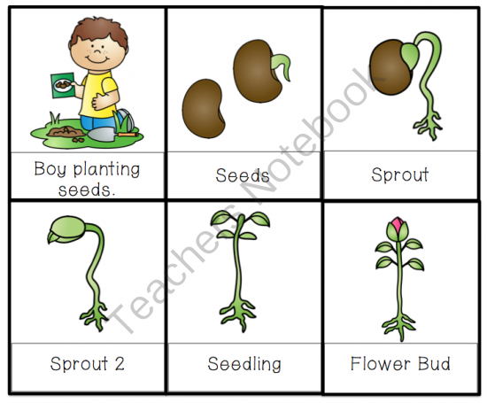 Let's Plant Seeds Printable ~ Preschool Printables