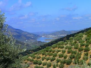 olive groves and lake, Fuensanta de Martos