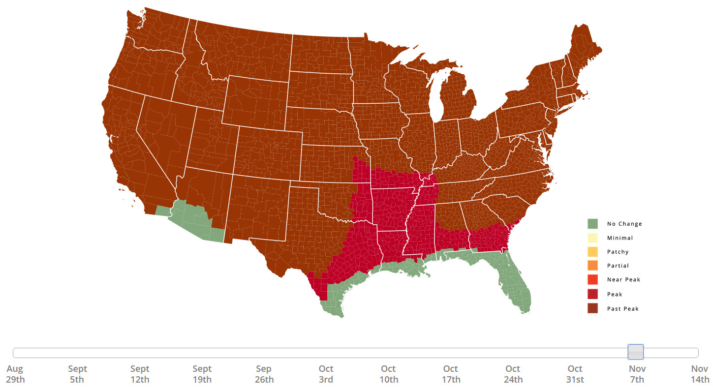 Fall foliage prediction map
