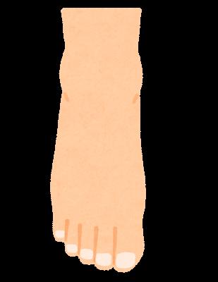 足の甲のイラスト