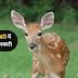 हिरन के बारे में 35 रोचक जानकारी - Information About Deer in Hindi