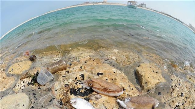 Environmentalists censure Kuwait media blackout on oil spill