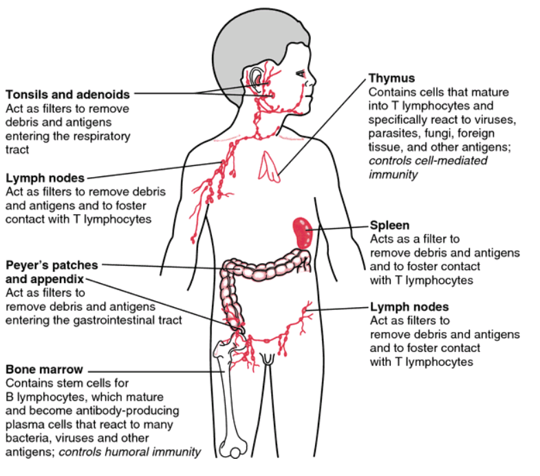 Epiphany: The over-activated Immune System in Autism or