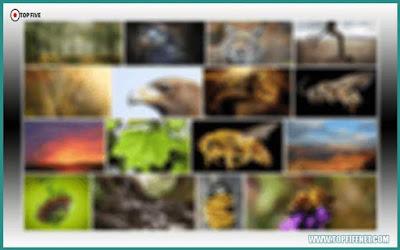موقع يمكنك من تحميل صور عالية الدقة مجانا واستخدامها في أي مشروع دون مشاكل حقوق ملكية
