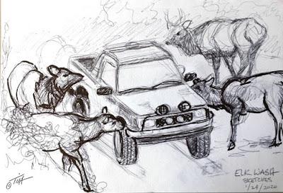 """Toy Truck, Giant Deer"" elk sketch two ©2020 Tina M.Welter"