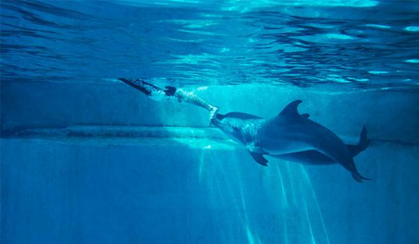 Menyaksikan Atraksi Lumba-Lumba di Dolphin Island Singapura