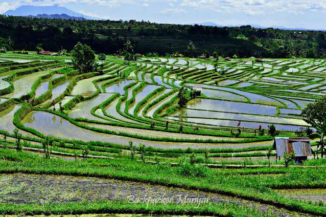 Area persawahan Jatiluwih Rice Terrace Bali
