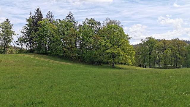 Łąki w Rudawach Janowickich