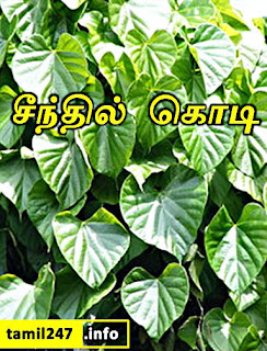 Seendhil kodi mooligai patriya vilakkam thoguppugal, Tamil siddha maruthuvam - சீந்தில் கொடி, Tinospora cordifolia; அமிர்தவல்லி.
