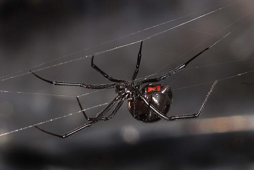 لولا العنكبوت لمات البشر جوعاً