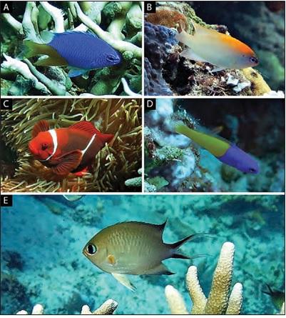 Jenis Jenis Ikan Karang Di Perairan Kepulauan Togean Munawir Net Catatan Opini Dan Sharing Berbagai News Tips Dan Trik