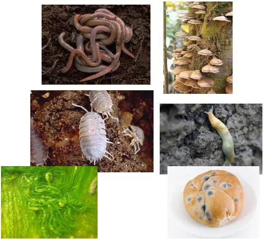 Contoh dekomposer Jamur, Cacing tanah, Ganggang kecil,