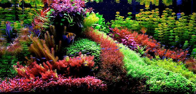 Jenis Gaya Style Aquascape Just Share