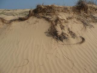 Национальный природный парк «Олешковские пески». Херсонская обл.