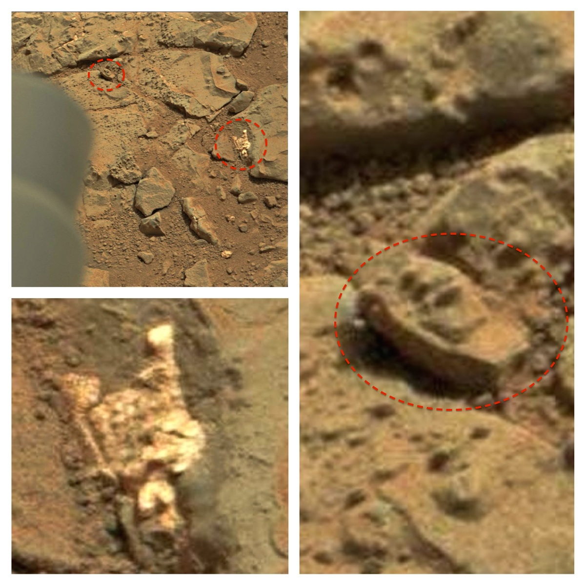 UFO SIGHTINGS DAILY: Fossilized Remains Found On Mars By ...