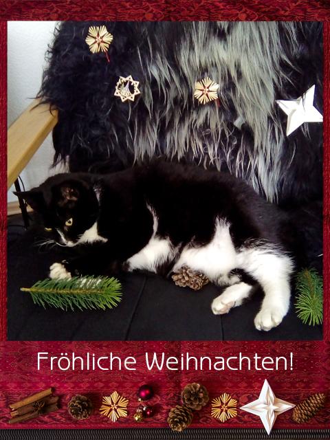 Schwarzweiße Katze umgeben von Weihnachtsdekoration, mit Schriftzug: Fröhliche Weihnachten!
