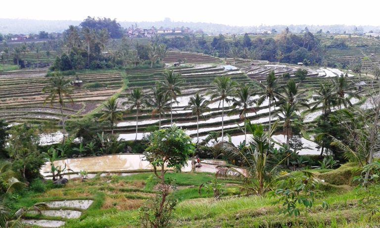 Jatiluwih Rice-field Terraces