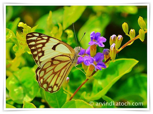 Butterfly,blue flowers,