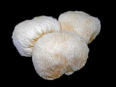 Lion's Mane (Hericium erinaceus)